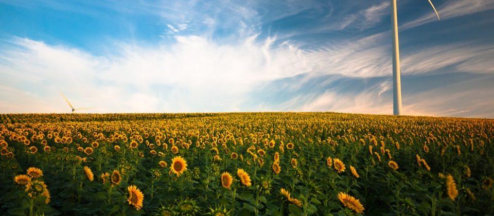 Celosvětový trend na snižování skleníkových plynů stojí za dynamickým rozvojem výroby energie z větru